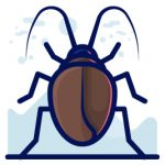 illustration of a cockroach