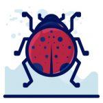 illustration of a ladybug