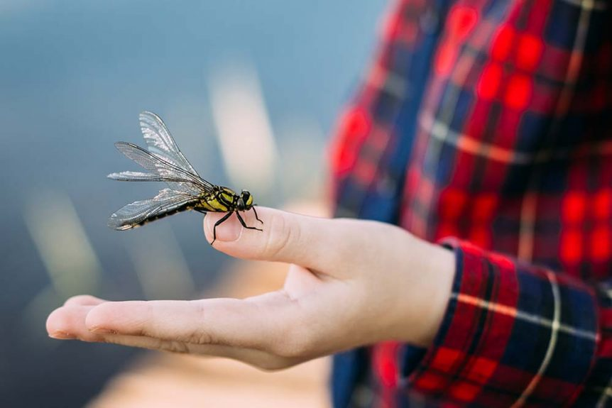 dragonfly-sits-on-finger-of-boy